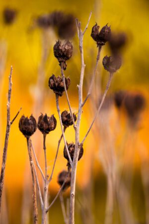 A photograph including beautiful colors and abstracted weeds.